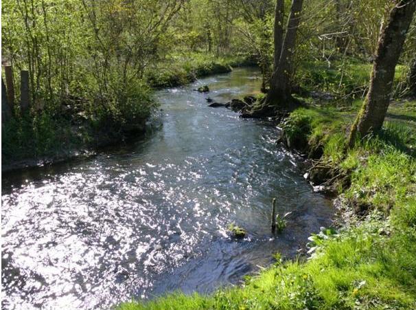 Le couasnon au niveau de l'étang communal de BeA